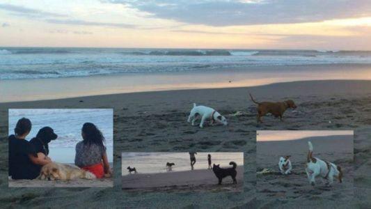 many dogs here @petitengget beach, seminyak
