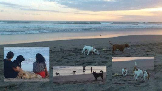 many dogs here @petitengget beach, seminyak