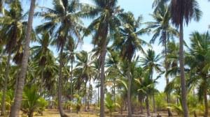 pulau tegah karimunjawa