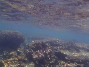 underwater karimunjawa