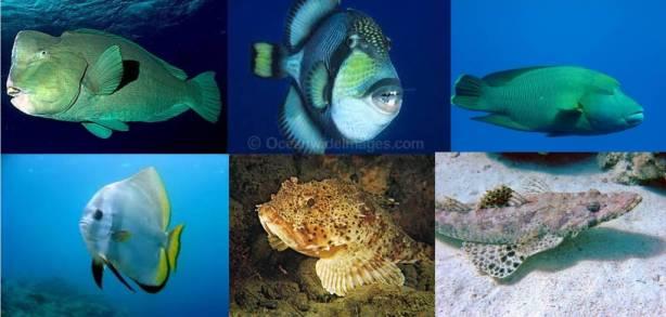 some of marine life i saw diving in gili trawangan